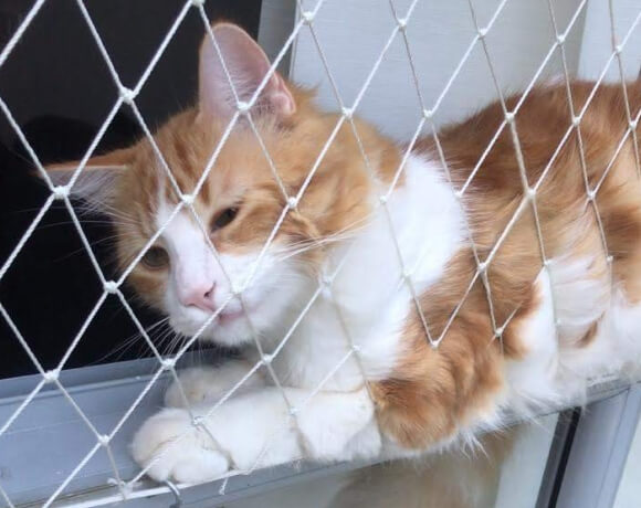 White multifilament safety cat net