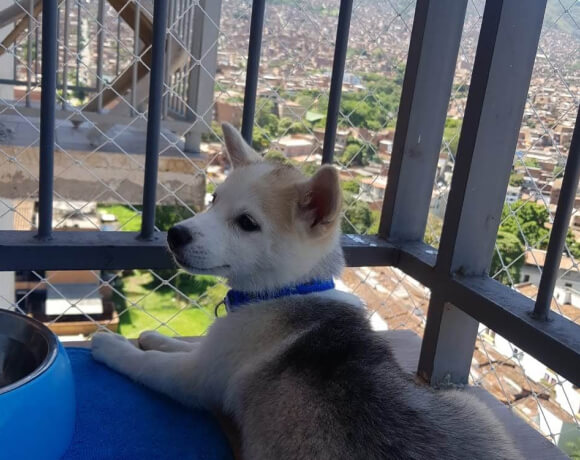 protective balcony nets for dogs