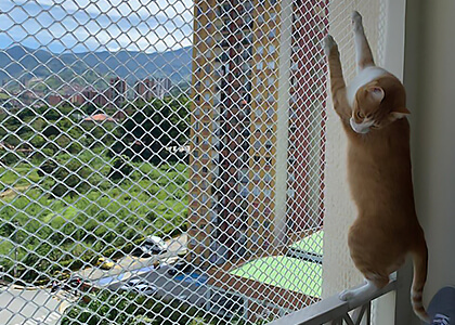 Mallas y Mascotas - Safety nets for cats and dogs in Medellín 7