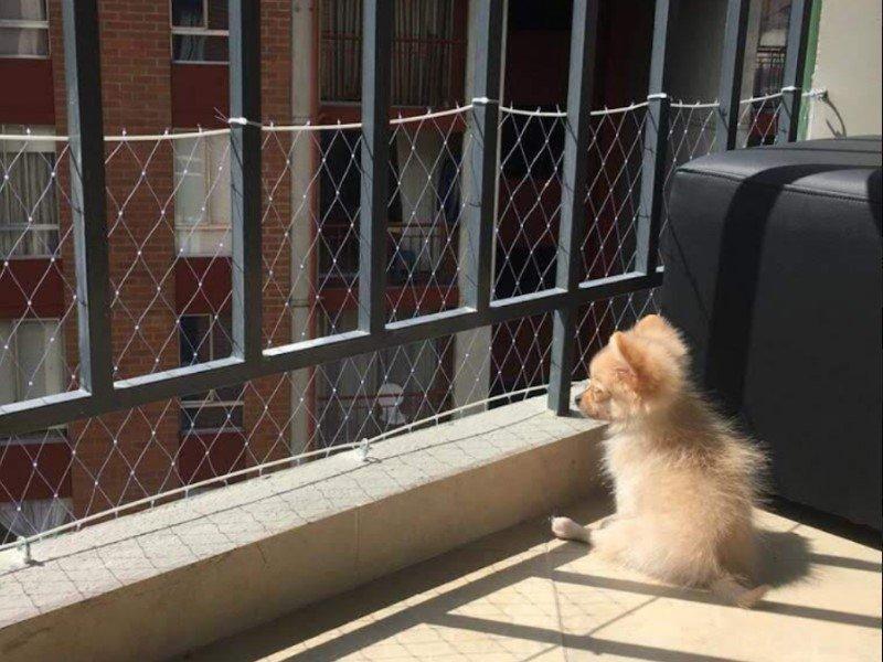 Malla de seguridad para perros